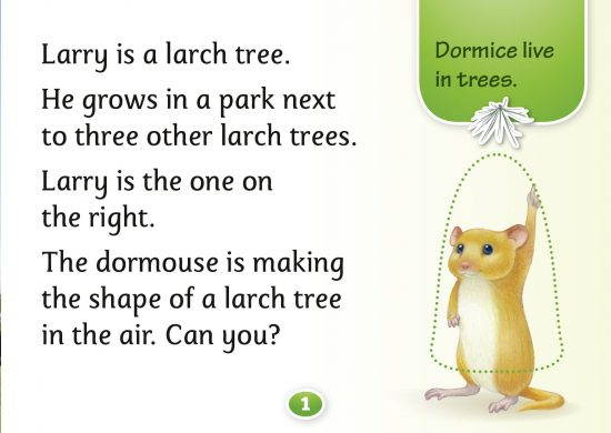 Larch Trees, Hello Trees, Kate Bretherton, Tree Books for children, books about UK trees