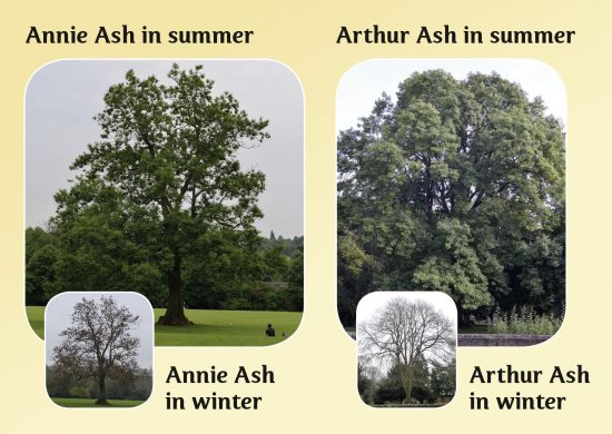 Hello Trees, Ash Trees, Books about Trees for children