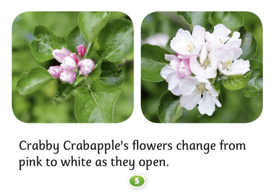 Crabapple trees, Crabby Crabapple, Hello Trees books, Hello Trees, Books about trees for children, Kate Bretherton