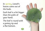 Lionel Lime, Hello Trees, Lime Trees, Tree books for children, books about trees, Kate Bretherton
