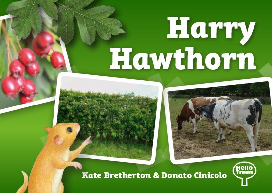 Harry Hawthorn, Hawthorn, Hello Trees, Books about trees for children, tree books, explorer books, Kate Bretherton