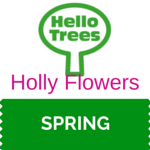 Holly Flowers Resource Sheet