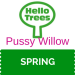 Pussy Willow Resource Sheet