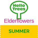 Elderflowers Resource Sheet