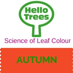 Why Do Leaves Change Colour in Autumn