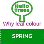 Why leaf colour