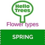 Types of tree flower