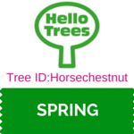 Tree Identification: Horsechestnut trees