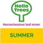 Horsechestnut leaf miner