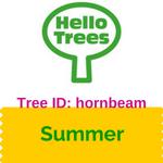 Tree ID: hornbeam