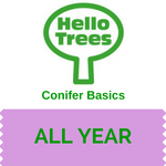 Get to grips with conifers.