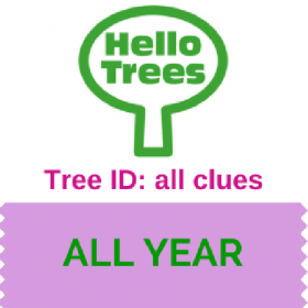 6 clues to tree ID