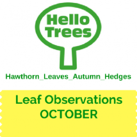 Record Leaf Observations