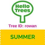 Rowan tree ID