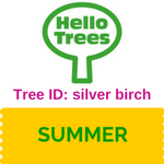 Silver birch tree ID
