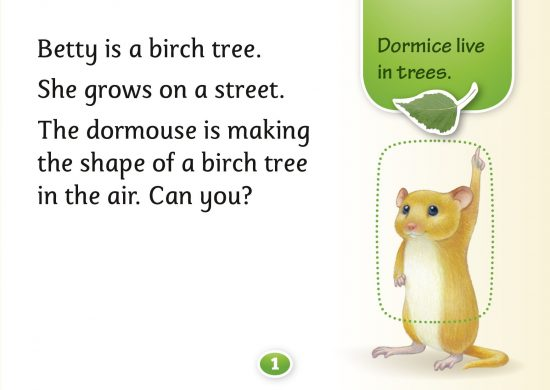 Birch trees, catkins, Hello Trees, Tree books for children, Kate Bretherton, forest schools