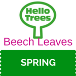 Beech Leaves Resource Sheet