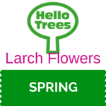 Larch Flowers Resource Sheet