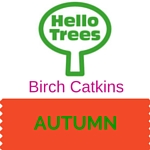 Birch Catkins Resource Sheet