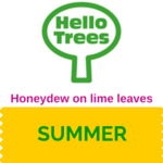 Lime-tree honeydew