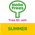 Tree ID: ash trees