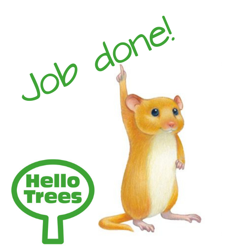 hello trees, dormouse, ks1 science, tree identification, primary schools, science, plants, trees