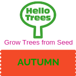 Grow trees from seed