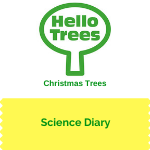 KS1 Plant Science: Christmas Trees